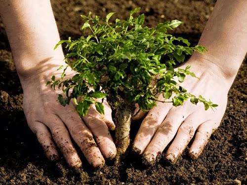 Consejos básicos para plantar árboles en jardines