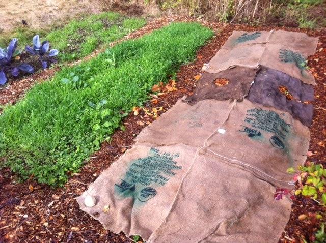 Cómo usar la arpillera para proteger el jardín y el huerto en otoño