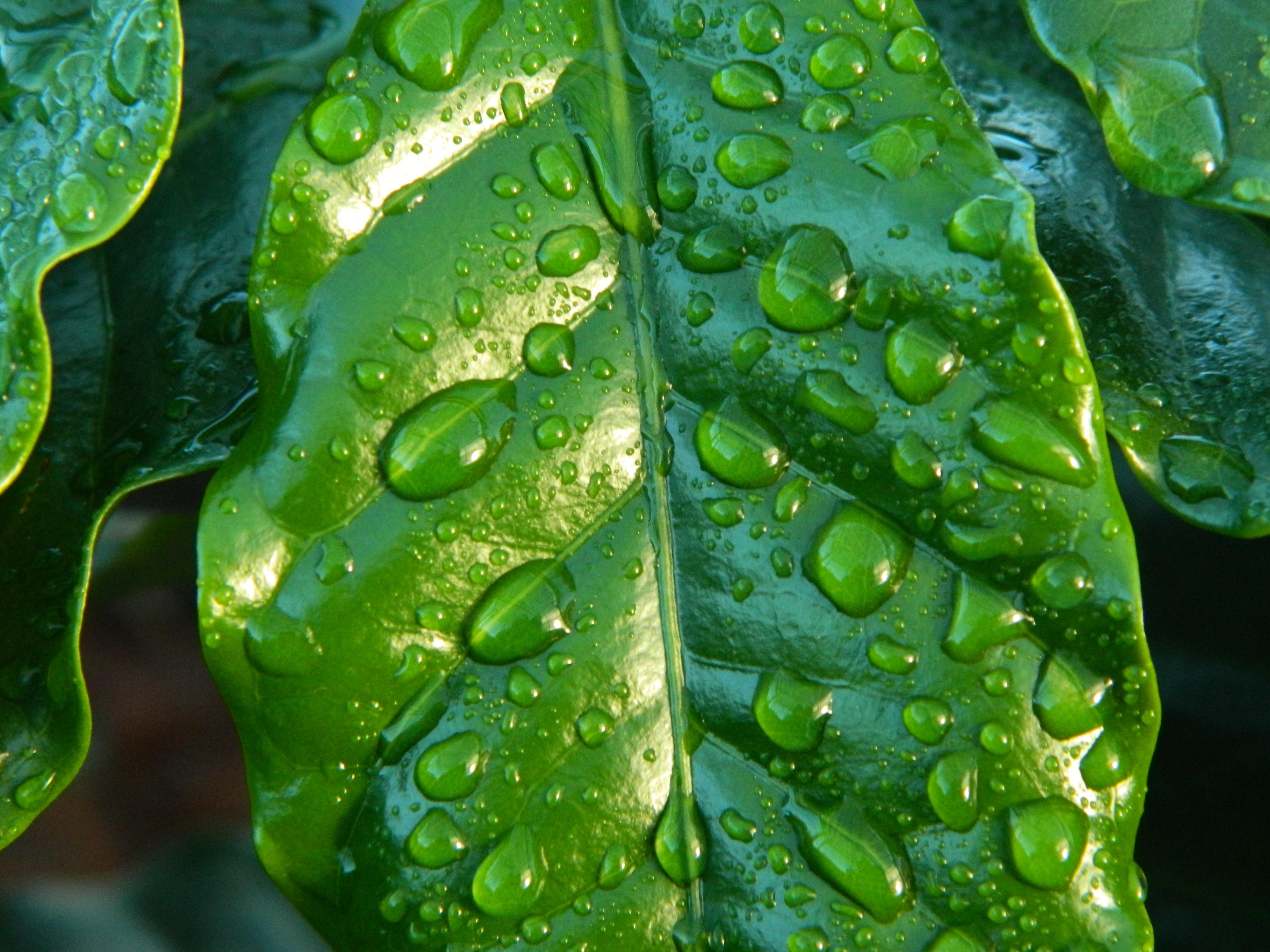 La importancia de limpiar las plantas de interior