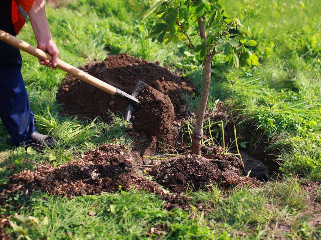 Consejos b sicos para plantar rboles en jardines arboles for Arboles de flores para jardin