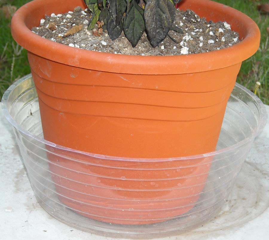 Cómo regar plantas desde la base de la maceta