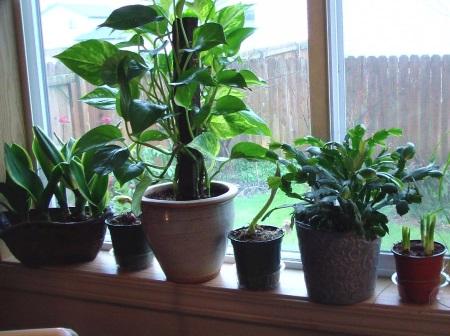 Trucos para cultivar plantas de interior con xito plantas - Plantas bonitas de interior ...