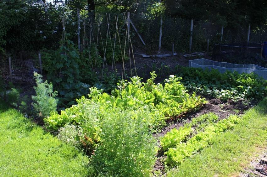 Qué verduras y hortalizas pueden sembrarse en un área sombreada