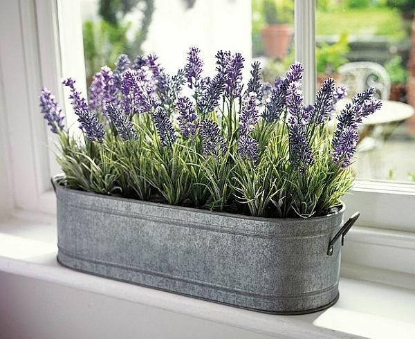 Plantas de interior para alejar a los insectos de casa