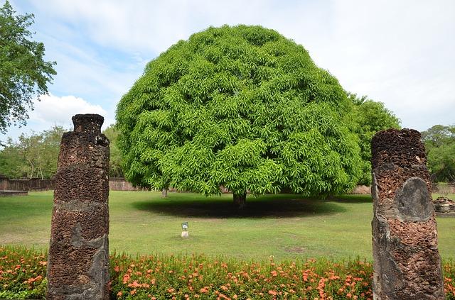 Árboles frutales: El mango (Mangifera indica)
