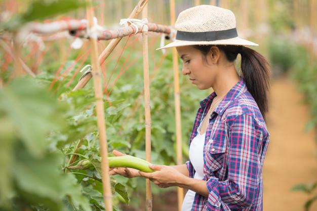 Cultivo organico