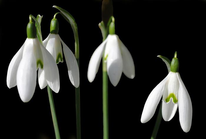 Plantas de invierno con flores