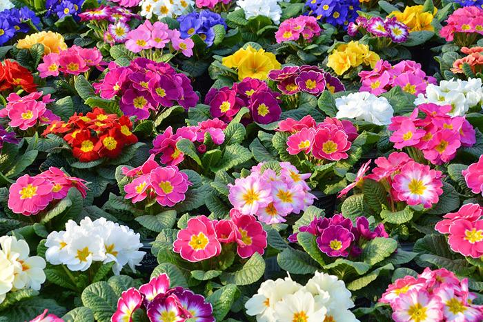 Plantas de Invierno con Flores de Sol y Media Sombra