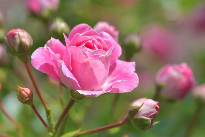 Plantas de Verano Resistentes al Sol