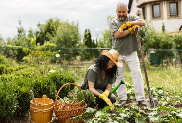 Eliminar Pulgones de Manera Natural y Sin Pesticidas