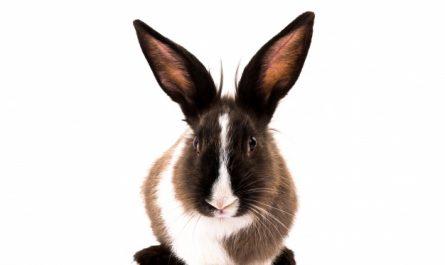 Humus de conejo