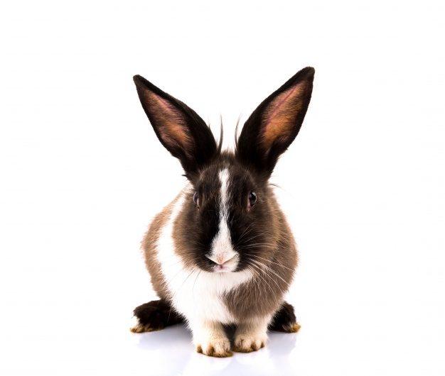 Humus de Conejo Como Abono Orgánico en el Huerto