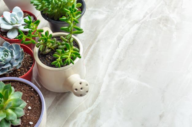 Decora tu Casa con Cactus y Crasas