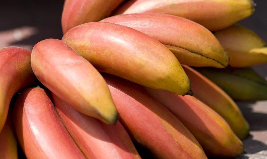 Plátano Manzano, Banano en Peligro de Extinción