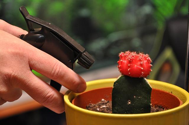Beneficios del agua oxigenada para las plantas