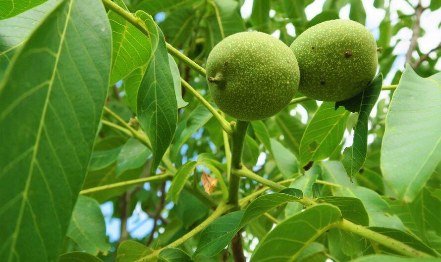 Árboles de frutos secos en el jardín