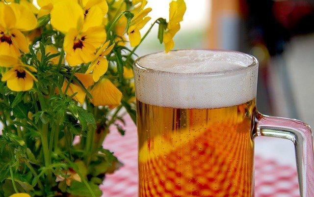 Cerveza, también la quieren tus plantas