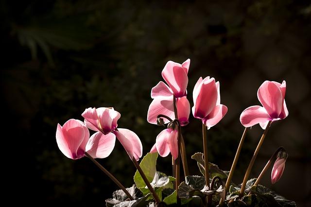 7 plantas resistentes a heladas