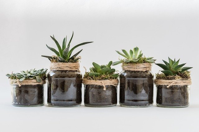 10 Plantas ideales para el cuarto de baño